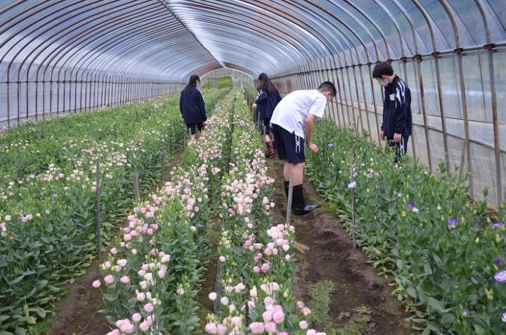 農業体験学習の実施について